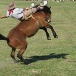 Gaucho lanzó su caballo encima a Carabineros para evitar su detención en Chile Chico