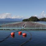 Subpesca ordena no entregar nuevas concesiones salmoneras en la Región de Aysén