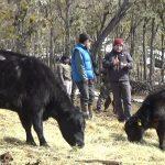Cuarentena: Ganaderos y limpiadores de caño podrán acceder a permiso especial