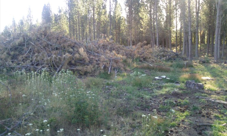Cochrane: Riesgo de incendio por desechos forestales de Conaf preocupa a la población